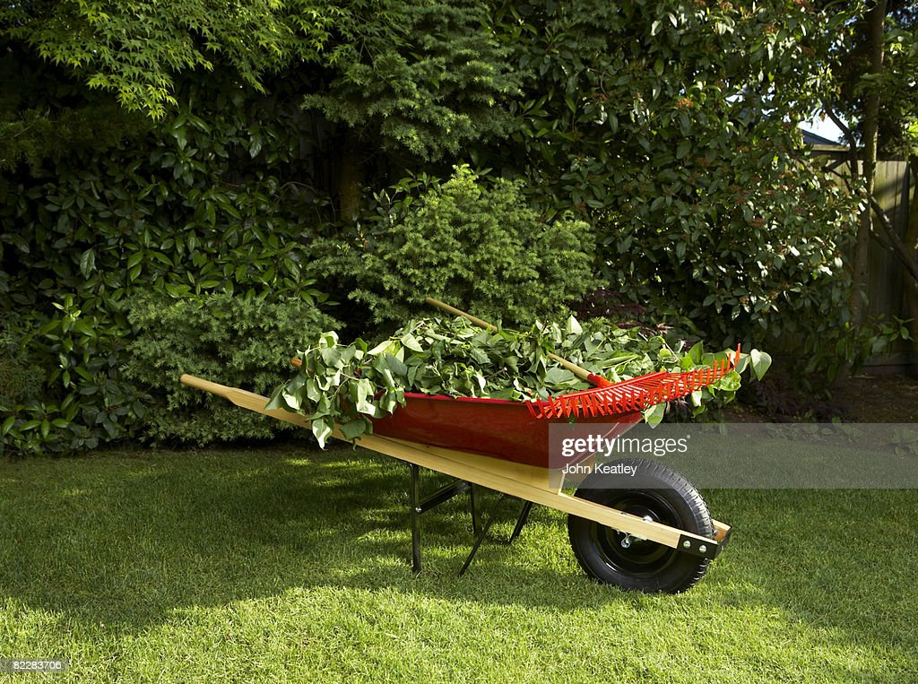 Wheelbarrow full of branches : Stock Photo