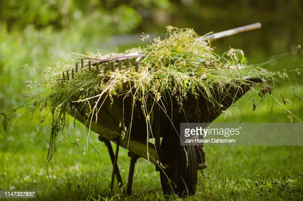 wheelbarrow full of weeds - horticulture stock pictures, royalty-free photos & images