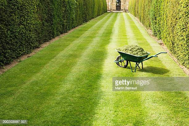 wheelbarrow full with grass clippings on mown, striped lawn - lawn stock pictures, royalty-free photos & images