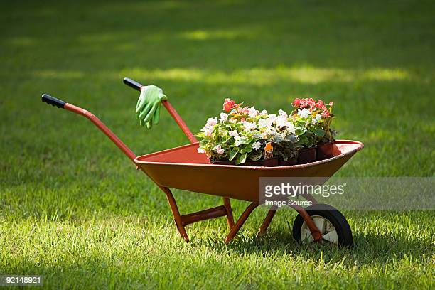wheelbarrow of plants - wheelbarrow stock photos and pictures
