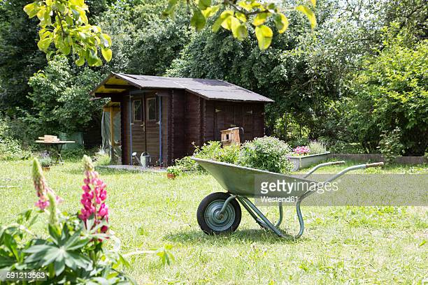 wheelbarrow with plant in garden - wheelbarrow stock pictures, royalty-free photos & images