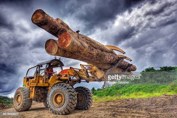 CONTENT] Wheeled loader moving tree logs at a logging camp on Borneo island This is a Caterpillar 966C with logging forks Old growth tropical rain...