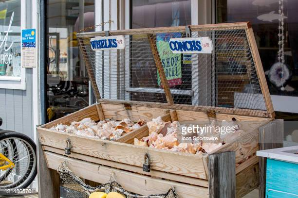 Whelks and Conchs are for sale on the Virginia Beach Fishing Pier on May 22 in Virginia Beach VA This is the first day of the beach's reopening for...