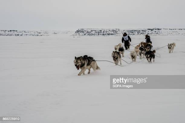 BAY INUKJUAK NUNAVIK QUEBEC CANADA When about to arrive the musher make sure the dogs wont spread around and stay focus to the trail Since 2001...