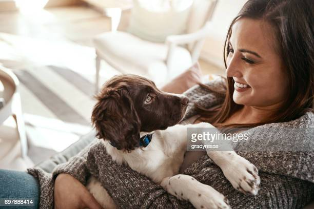 when i needed a hand, i found your paw - spaniel stock photos and pictures