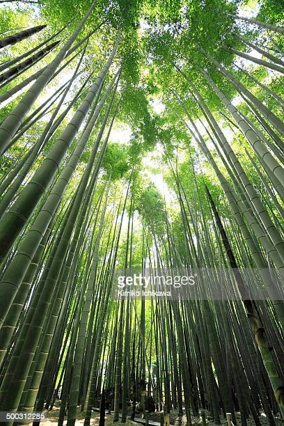 When I visited Kamakura, I always went to Hokokuji temple. Hokokuji temple is called Bamboo Temple. There is a beautiful bamboo garden. That is a...