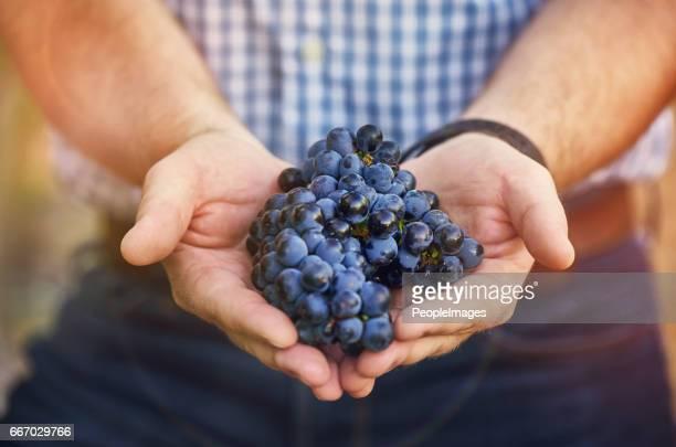 Wanneer leven geeft u druiven...