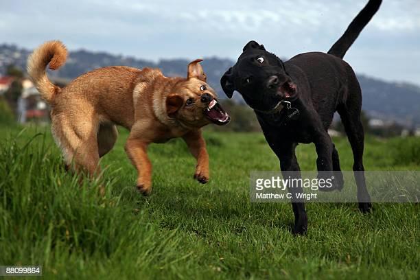 When small dogs attack