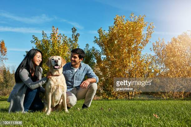 When we're out with our dogs, our stress levels decrease