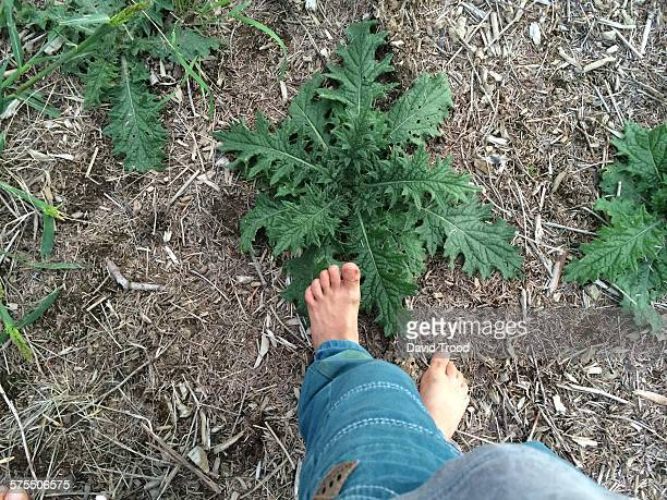 pov: where are your feet? - hillerod stock pictures, royalty-free photos & images