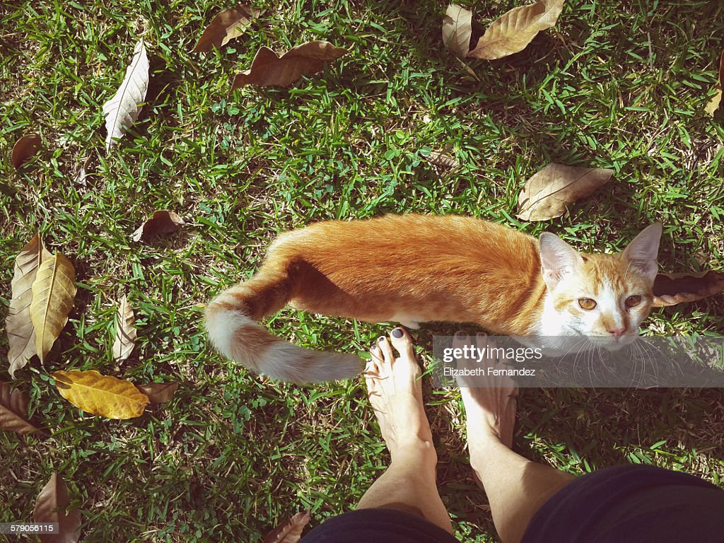 Cat and feet