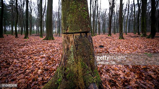 Where did the lumberjack go?