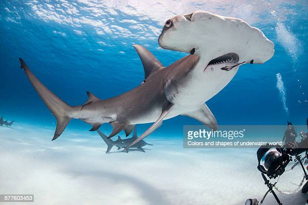 where size matters - south bimini stock photos and pictures