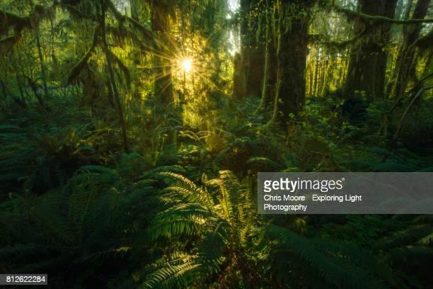 Where the Green Fern Grows