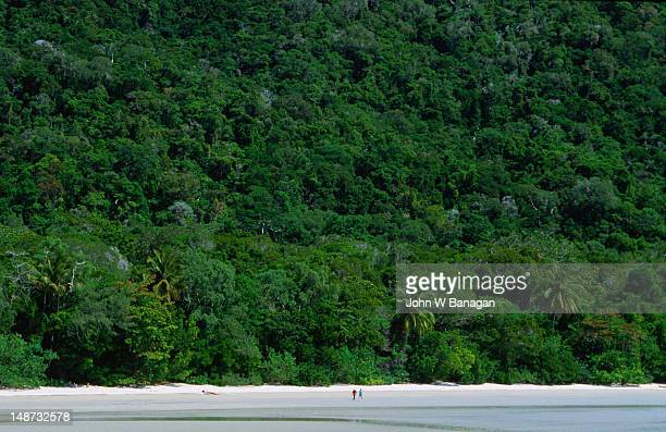 Where the rainforest meets the reef at Cape Tribulation, FNQ