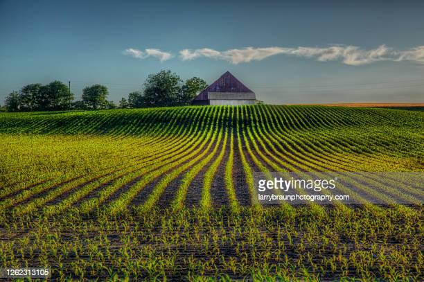 where the rows lead - ミズーリ州 ストックフォトと画像