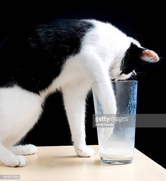 Black and white cat using paw to drink milk from a glass with a black background