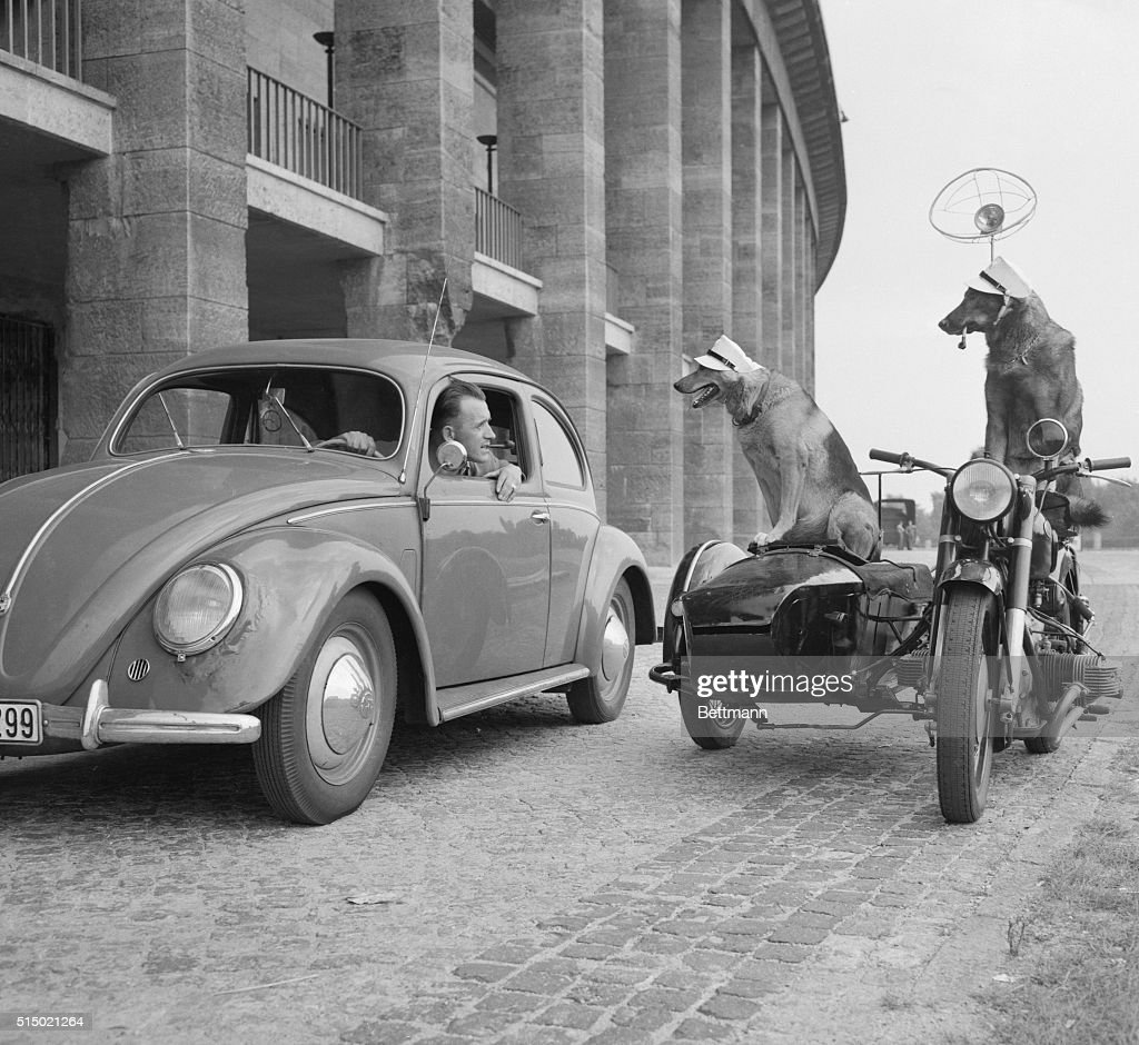 Where's the Fire, Bub? West Berlin, West Germany: Two West Berlin police dogs, 'Wolf' and 'Hector' are shows as they rehearsed their act for the annual show put on by the West Berlin police at Olympic Stadium. 'Wolf' seems to be asking for the driver's license here, while 'Hector' puffs on a pipe and keeps an eye on other traffic. The motorbike and sidecar in which they perform are operated by remote control.