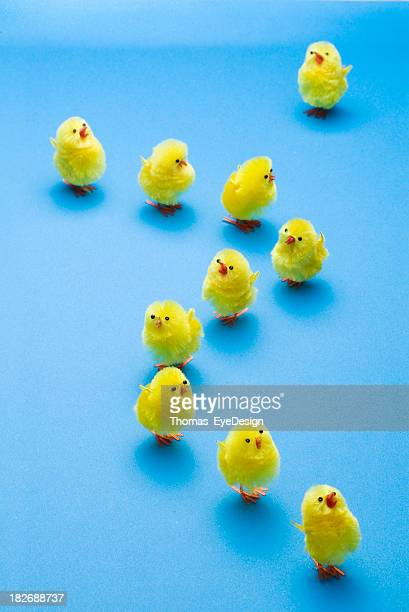 which way - easter chick stock pictures, royalty-free photos & images