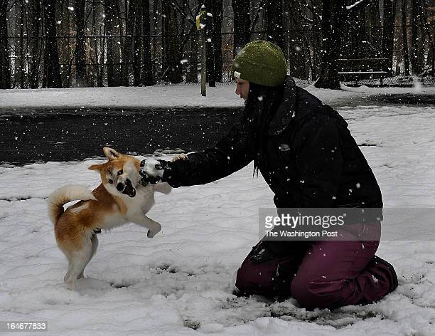 While most dogs gets excited playing fetch with a stick or a ball Riley is crazy for snowballs Nika Nauman teased her 5 monthold Shiba Inu/American...