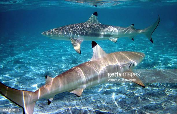 While on Bora Bora we took an excursion to swim with sharks and stingrays. Although we were well out away from shore, we were still within the...