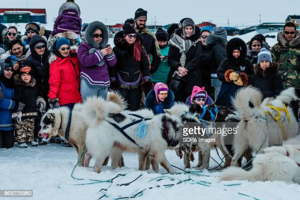 BAY INUKJUAK NUNAVIK QUEBEC CANADA While the Husky dogs take a rest between races curious people surround them Since 2001 Ivakkak has been an event...