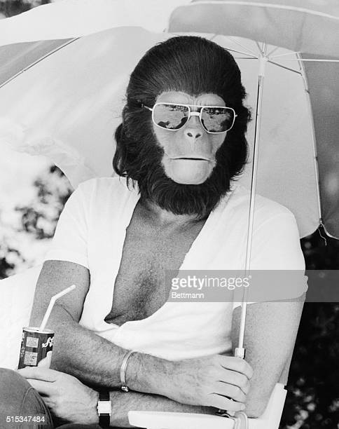 While the rest of the country is bracing for winter Roddy McDowall shades himself from hot Malibu sun at 20th Century Fox TV's ranch where he is...