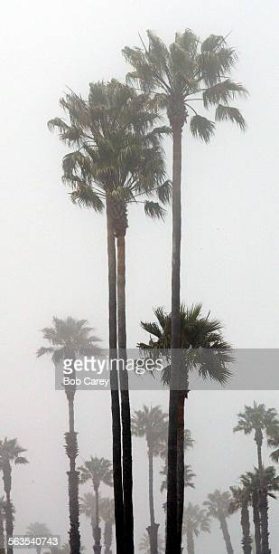 While the rest of Ventura County was warming up with sunny weather, a stubborn coastal fog hung around the coastline, enshrouding boats and palm...