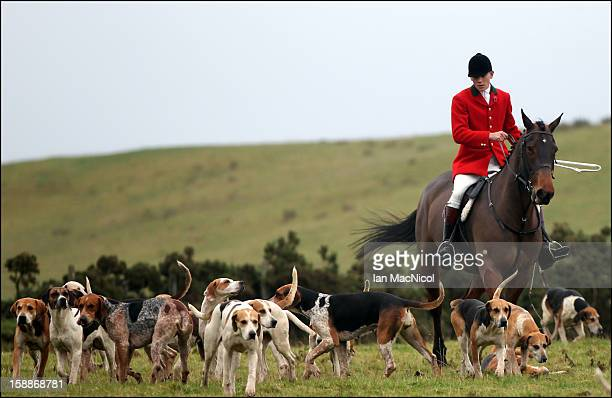 Whipper In Johnny Richardson with some of The Duke of Buccleugh's Fox hounds which he looks after on November 09 2011 in St Boswells Scotland