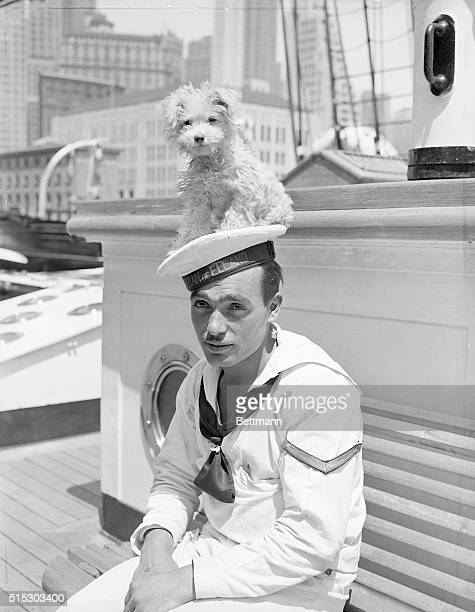 Whiskers the mascot of the Juan Sebastian De Elcano Spanish training ship sits atop a cadet's cap while moored at Pier 8 on the East River The small...
