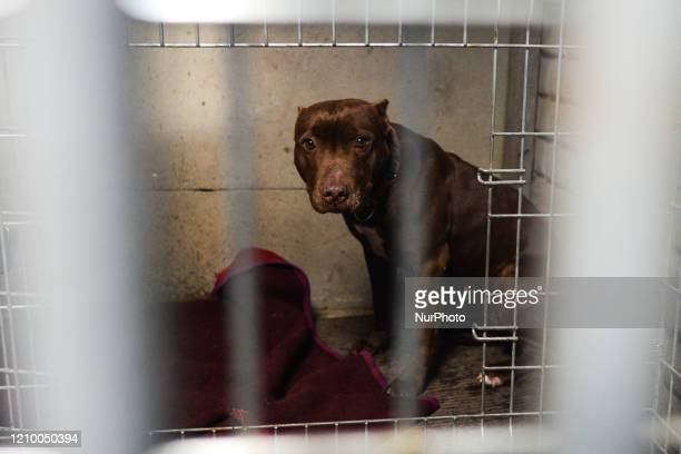 Whiskey, an abandoned dog seen in a cage at the Szarikton private hotel for dogs. Along with its kennel services, the Szarikton provides a 'window of...