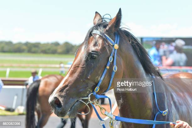 Whistler Bowl after winning the Hamilton Reid Chartered Accountants Plate at Ladbrokes Park Hillside Racecourse on November 29 2017 in Springvale...