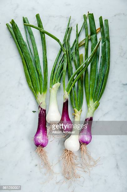 White and purple spring onions with roots