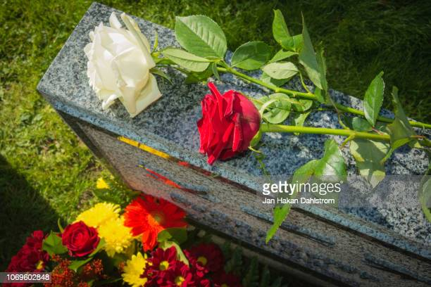 white and red rose on tombstone - grabmal stock-fotos und bilder