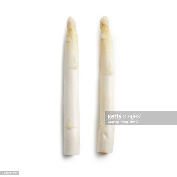 White asparagus