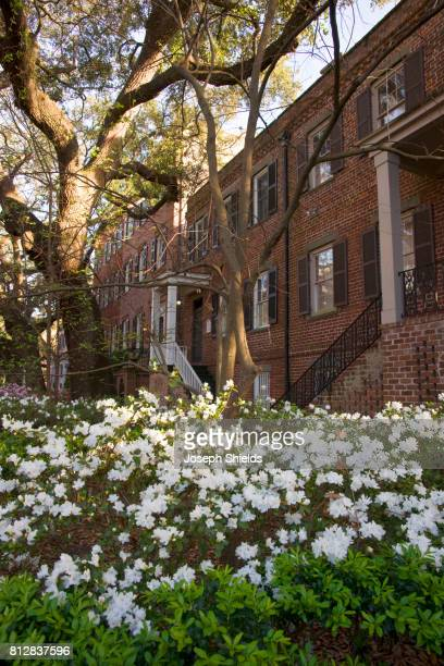 white azaleas - historic district stock pictures, royalty-free photos & images