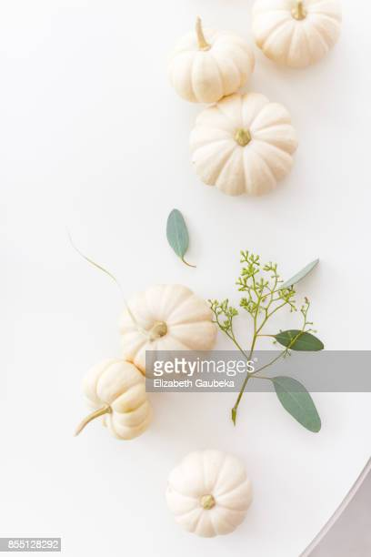 White Baby Pumpkins on white background