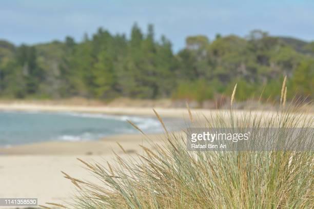 white beach in tasman national park australia - rafael ben ari stockfoto's en -beelden