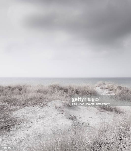 white beach - lise ulrich stock pictures, royalty-free photos & images