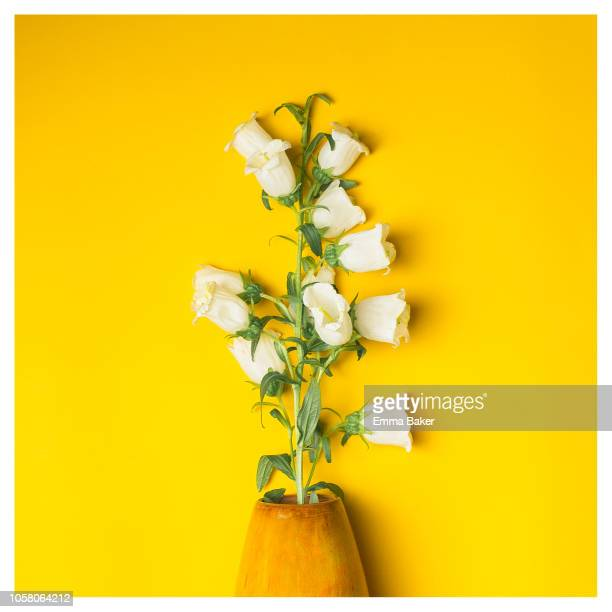 white bells - emma baker stock pictures, royalty-free photos & images