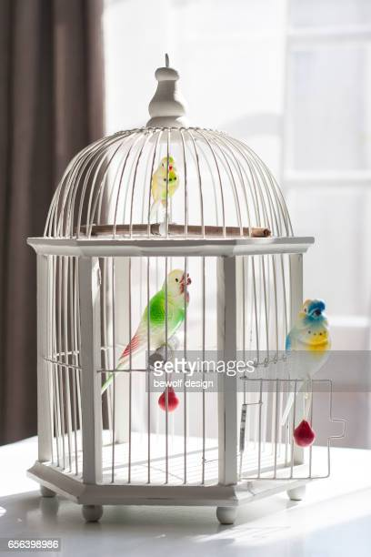 white bird cage with 3 birds of plastic - plastikmaterial stockfoto's en -beelden