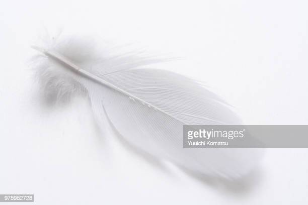 white bird feather, fukuoka, kiusiu, japan - piuma foto e immagini stock