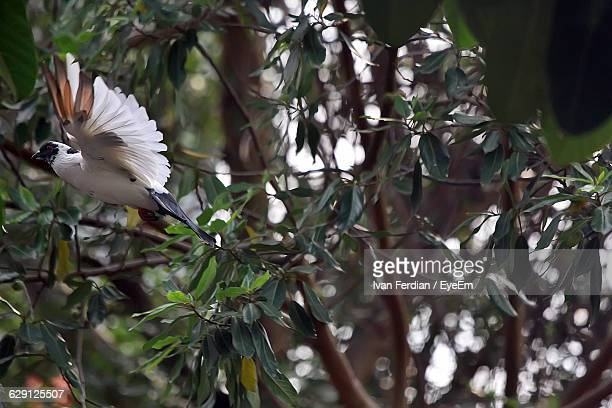 White Bird Flying By Trees At Forest