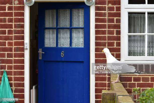 white bird on wall of building - no people stock pictures, royalty-free photos & images