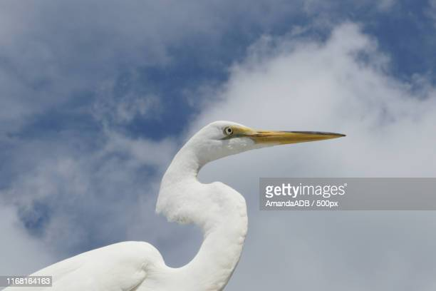 white bird - amanda and amanda stock pictures, royalty-free photos & images