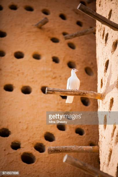White bird sitting on stick, Katara, Doha, Qatar