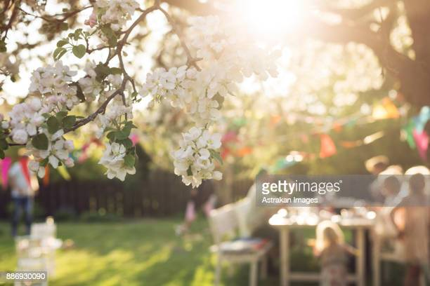 white blossom and people in the background sitting at picnic table - pessoas ao fundo imagens e fotografias de stock