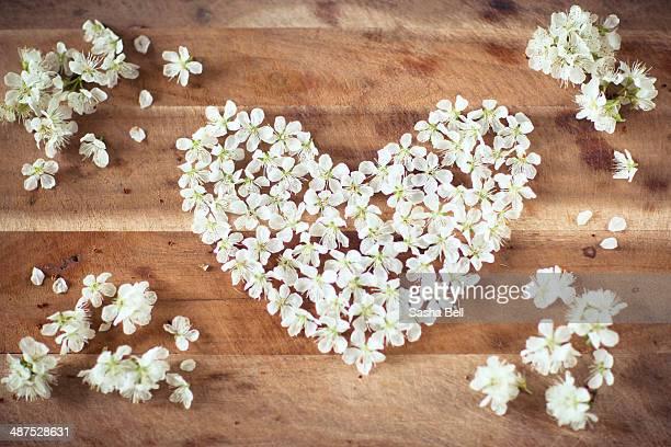 White Blossom in Heart Shape