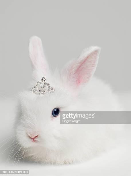 White bunny rabbit wearing tiara, close up, studio shot