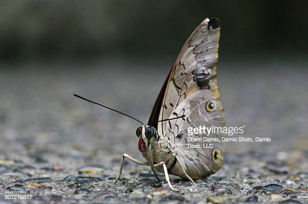 white butterfly - damlo does stock pictures, royalty-free photos & images